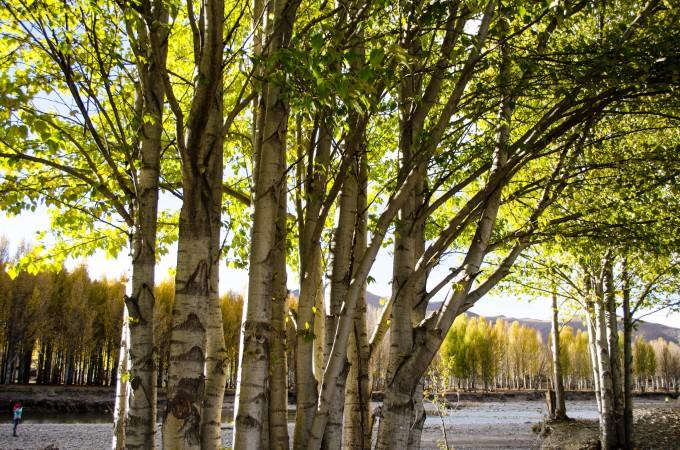 秋天树林子图片