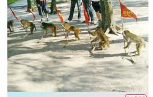 【上川岛图片】广州往台山上川岛旅记(两日一夜/租帐篷露营)