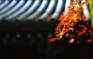 【白滨町图片】巴赫尔红叶季逛关西 -- 红叶季日本关西自由行购物交通住宿攻略