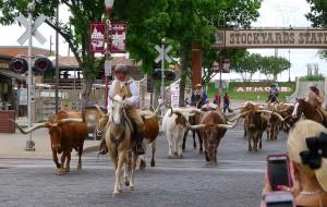 【达拉斯图片】狂野德克萨斯--达拉斯及其周边(沃斯堡,奥斯汀,圣安东尼奥)