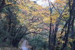 当深秋和初冬与黄山相遇