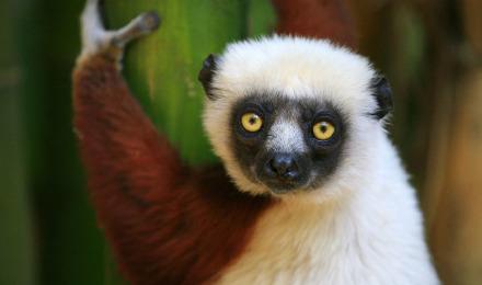 探密1.6亿年孤单岛屿马达加斯加