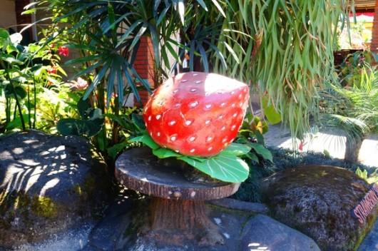 巴厘岛罗威那看海豚一日游(草莓小站 水果市场 巴厘岛