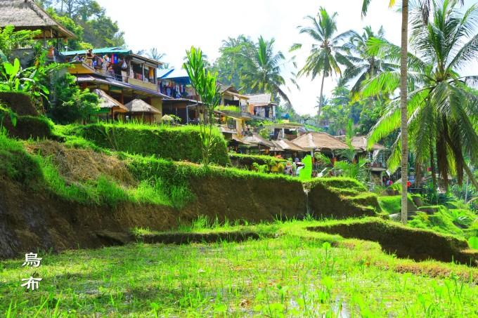 蓝毒之旅(三)——巴厘岛乌布美食记
