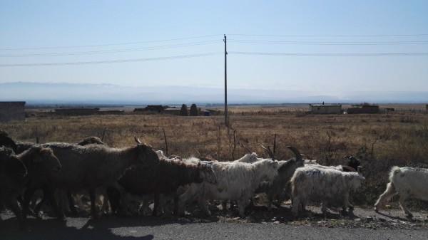 新疆特有的动物图片