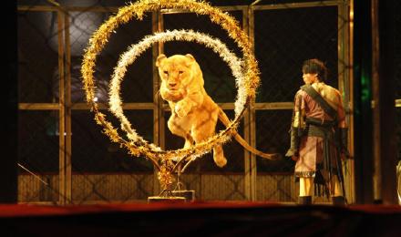 【广州出发】长隆野生动物园+珠海海洋王国+长隆欢乐
