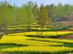北京春天赏花去哪里,北京5大赏花圣地