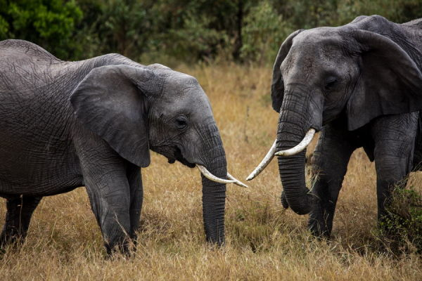 说不完的动物故事——肯尼亚纪行(5)