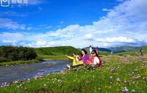 【阿坝图片】红原俄木塘--花的海洋
