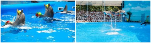 普吉 尼莫海豚馆·海豚表演门票(含接送)