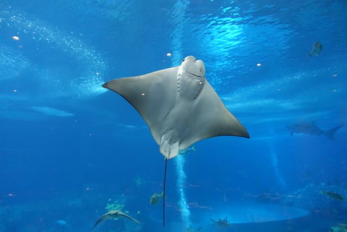 说走就走—广州长隆野生动物园,珠海海洋王国(8日港澳