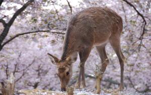 【箱根图片】【历史宝藏】在日本行走 1700 天的旅行心得——四季奈良篇