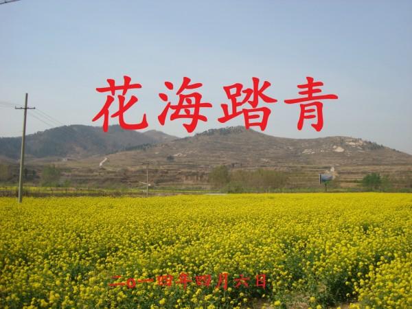 樟树镇坦泉村有多少人口_樟树