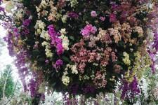 滨海湾花园