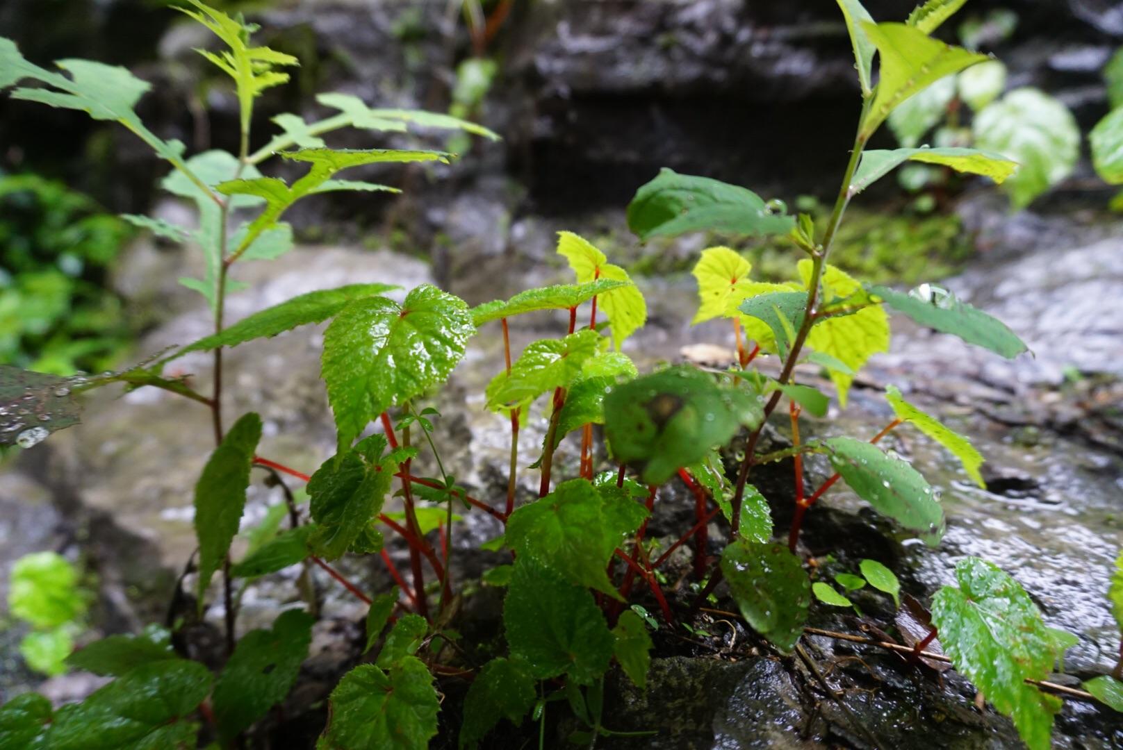 太行山大峡谷---雨中漫步